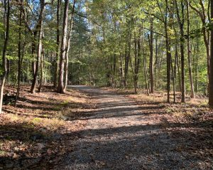 Reedy Creek Nature Preserve trail